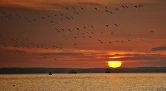 Solent sunset with geese (Mike Ashton) Tags: sunset sea sky orange sun bird beach ferry photoshop evening coast fly geese wings nikon flock flight goose hills shore isleofwight solent southsea 70200mm jiggerypokery d300