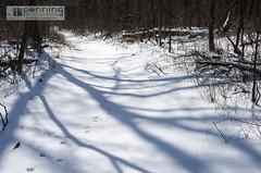 Deer & Trees (MattPenning) Tags: trees winter shadow snow forest trekking walking woods afternoon shadows pentax potd deer k5 springfieldillinois mattpenning deertrack kmount mattpenningcom carpenterpark penningphotography justpentax pentaxsmcfa31mmf18limited pentaxk5