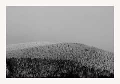 la colline (Steph Blin) Tags: winter bw snow monochrome montagne hiver hill nb neige auvergne firs sapins