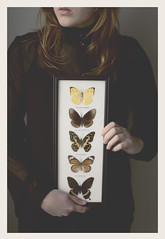 The butterfly collector (daphne og.) Tags: portrait selfportrait black self vintage project framed butterflies days collection 365 collector