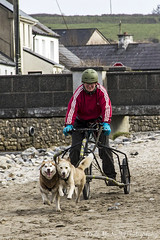 Dog Sledding on Enniscrone Beach (linda_mcnulty) Tags: woman dogs strand coast sand run sledding trike huskey sligo easkey enniscrone dogsrunning inniscrone