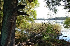 Ufer (ThomasKohler) Tags: autumn lake tree fall nature see herbst natur baum mecklenburg feisneck seenplatte mecklenburgerseenplatte warenmüritz mecklenburgischeseenplatte warenmueritz feisnecksee warenandermueritz