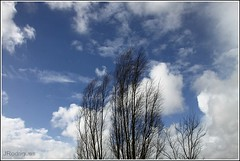 (JRodrigues.) Tags: img0802 2013 europe portugal montemorovelho ereira sky clouds trees winter blue minimalism