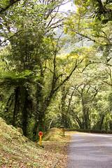 (Angelita Niedziejko) Tags: color tree green paran beautiful brasil composition landscape photography flickr dof natureza atmosphere paisagem framing rvore atmosfera composiao composio serradagraciosa mataatlntica