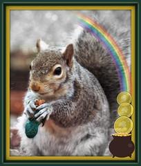 Have a bit of the peanut (MissyPenny) Tags: irish squirrel graphic pennsylvania wildlife peanut editing stpaddy easterngreysquirrel greysquirrelwildlife pdlaich missypenny
