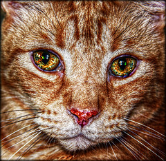 Changes - 256th Explore Pic (Chris C. Crowley) Tags: pet cat feline kitty explore changes squeegee chriscrowley myfavoritekitty squeegeesgettingold squeegeeat15