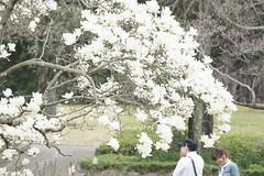 _DSC9043 (Fomal Haut) Tags: japan nikon nagoya  ume streetperformance  d4     d800e afsnikkor80400mmf4556gedvr