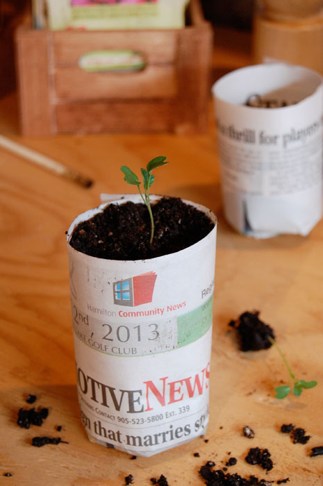 paper-pot-seedling
