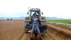 0042VIÑEDOS-plantar-injertos-(22-3-2013)-P1020047 (fotoisiegas) Tags: viticultura viñas viñedos cariñena plantar injertos fotoisiegas lospajeras