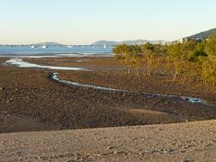 Mangrove storm-buffer forest, bicentennial walkway, Airlie beach, Whitsunday Islands, Australia (Alta alatis patent) Tags: storm beach forest marina islands australia mangrove airliebeach buffer whitsundayislands ablepointmarina bicentennialwalkway