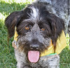 "Pet of the Week: Huck • <a style=""font-size:0.8em;"" href=""http://www.flickr.com/photos/42888877@N06/8602988694/"" target=""_blank"">View on Flickr</a>"