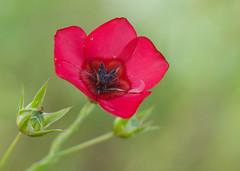 05 (Jamil-Akhtar) Tags: flowers pakistan canon spring mark 9 ii 5d jupiter islamabad