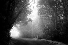 There was light (sinisa ostojic) Tags: road park leica light bw mist film fog analog forest 50mm rainforest freestyle australia d76 summicron national analogue m6 goldcoast springbrook arista sinisaostojic