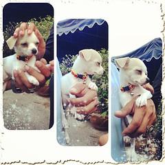 #ลูกหมาของน้าหนู #คนขับรถที่ม. #ชื่ออะไรไม่รู้ #น่ารักมาก #อยากเล่นอีก #น้องเรียบร้อยเว่อร์
