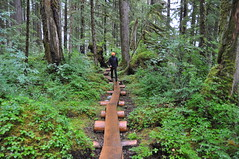 Hiker on a boardwalk trail in Tongass National Firest (rzm_photos) Tags: alaska forest moss rainforest path hike trail national boardwalk hiker dogwood hemlock tongass