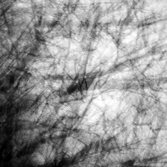 retinal (wood_owl) Tags: trees ohio bw abstract nature forest experimental chaos expression branches impression icm vessels watchingyou retina clockwise watchingme selfsimilarity munroefallsmetropark sharedvision intentionalcameramovement oftheeye
