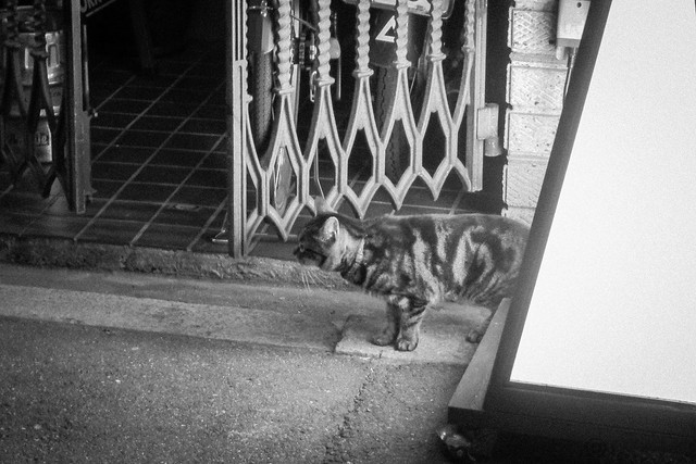 Today's Cat@2013-04-23