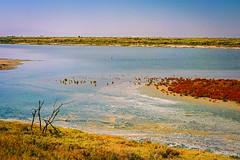 (CrippleHorse) Tags: sea landscape thessaloniki nikonfe2 riverdelta kodakektar kalochori