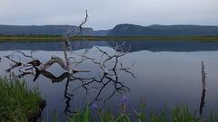 Jerrys Pond, Gros Morne National Park, Newfoundland, Canada (alex_7719) Tags: grosmorne grosmornenationalpark newfoundland canada jerryspond water mountains tree reflection          longrangemountains