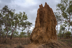 Termite Mounds Northern Territory-4