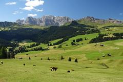 Sdtirol - Alto Adige (sirmick53) Tags: italy italien berge mountains alpen alpes sdtirol altoadige southtyrol valgardena grdnertal seiseralm pferde panorama grn blau sella wolken cliuds