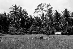 IMG_0270 (Marta Montull) Tags: holidays indonesia canon gopro malaysia kuala lumpur bali gili islands rice terraces temples monkey travel photography landscape