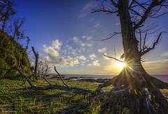 Dead Trees With Morning Sunrise (kijimuna.) Tags: tree landscape sea beach sunrise clouds canon eos6d okinawa japan longexposure morning          ginoza seascape