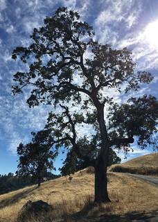 Tree, Road, Sky @ Kings Ridge