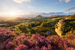 Roseberry Heather (matrobinsonphoto) Tags: roseberry topping cockshaw hill gribdale sunset sunlight sun light golden hour pink purple bell heather bloom blooming summer late evening countryside landscape outdoors view classic rural england britain british cliff north york moors yorkshire