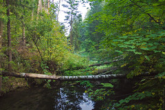 Dam on the Backup Channel (Alexander Annenkov) Tags: dam backup channel losiniy ostrov national park balashiha moscow region russia forest trees green water