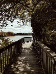Fairytale (Kendall Seitz) Tags: bridge wood tree tunnel outside vintage old water lake path rock nature natur trip flickr sky blue light clouds summer trees river garden fence lines serene sunny brown paysage happy digital country tennessee muted color