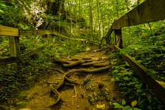 Natural Steps (+Lonnie & Lou+) Tags: nature sony tennant ohio travel forest landscape green path explore park gorge trees serene day sky