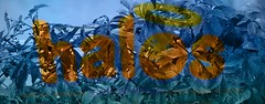 halos (Joseph Austin) Tags: blended blendedimages photoshoped layers adjustment layersadjustment luminosity virginiacreeper vine autumn fall colors fallcolors halos box blue oragne abstract happyface face happy