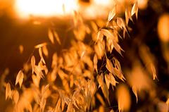 amberleaf (Just Ron ;)) Tags: bokeh light nature outdoors nikon imageron d750 shade