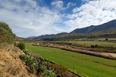 Green Landscape in Kareedouw (charissadescande) Tags: grass natural sunrise season nature land outdoor landscapes wonderful clouds color countryside route62 colorful scenery beautiful travel background beauty blue sky green morning tourism mountain valley kareedouw easterncape southafrica zaf