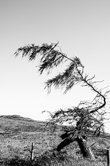 against the wind (cornucopiae) Tags: greatglen