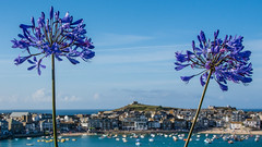 St. Ives, Cornwall 5 August 2016 (BaggieWeave) Tags: cornwall beach seaside cloud cliffs harbour agapanthus stives