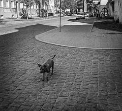 dog (andrzejslawinski) Tags: dog city loneliness pentax street streetphoto proscan7200 me
