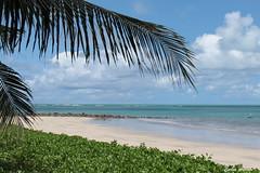 Praia de Serrambi (Carlos Amorim (Camorim10)) Tags: serrambi praia ipojuca pernambuco brasil mar azul gua coqueiro verde areia