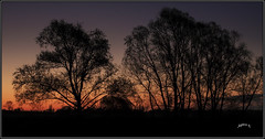 Making Memories. (Picture post.) Tags: landscape nature green trees sunrise silhouetts paysage arbre interestingness