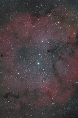 Elephant's Trunk Nebula (entilza.delenn) Tags: elephant trunk nebula ic1396 deepsky astrophotography formation star elephantstrunknebula astronomy d5300 nikon