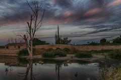 349 (Rafi Moreno) Tags: horaazul tablasdedaimiel ciudadreal paisaje nature landscape naturaleza proyecto365fotos 365proyect canon rafi españa spain reflejo cielo amanecer