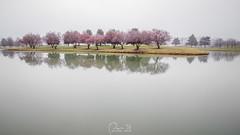 Winter Pink (Capture Lights) Tags: fujifilm lake landscape michigan mist reflection rokinon samyang water winter