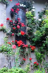 Faade aux roses (didier95) Tags: rose fleur rosier rosiergrimpant fraissesuragout facade faade fenetre herault languedocroussillon
