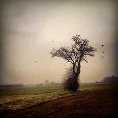 Waiting for spring (Nada*) Tags: winter tree texture field birds mobile dark season spring phone telephone dramatic cell depression crows drama murky 4s depressing iphone atmosfere instagram iphone4s