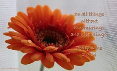 No Complaints (Glenda Hall) Tags: orange blur flower macro texture closeup canon petals focus waterdrop dof background blurred drop gerbera droplet bible softfocus inspirational scripture bibleverse canon60d bibletext fleursetpaysages glendahall