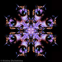 catoscope (Kristina Shchetinina) Tags: cats cat graphicdesign graphics kitty kaleidoscope trippy psychedelic psychedelia kittys kaleidoscopic psychedelicart
