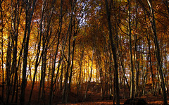 Walk into the Light (Batikart) Tags: autumn light brown black fall nature leaves yellow rural forest canon germany landscape geotagged carpet outdoors deutschland buchenwald leaf flora europa europe day earth path herbst jahreszeit na