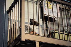 Today's Cat@2013-04-22 (masatsu) Tags: cat canon catspotting thebiggestgroupwithonlycats powershots95