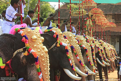 MG_3557 (PRATHAPSTOCKIMAGE) Tags: india elephant festival canon religion decoration kerala trissur pooram nettipattom eos60d